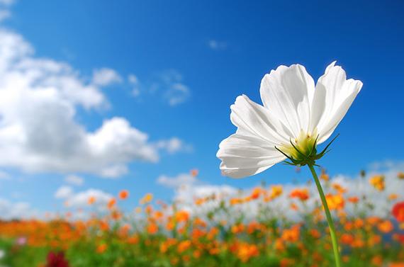 江島達也氏の花