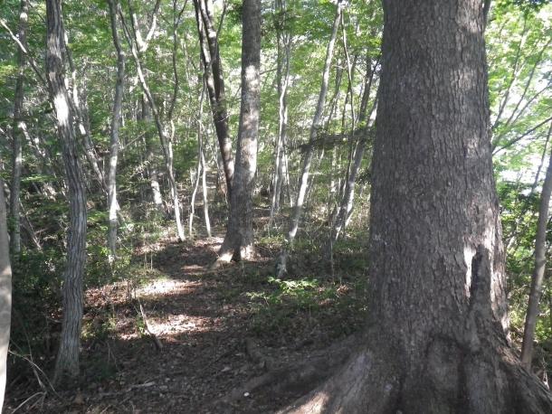 田中林業の森