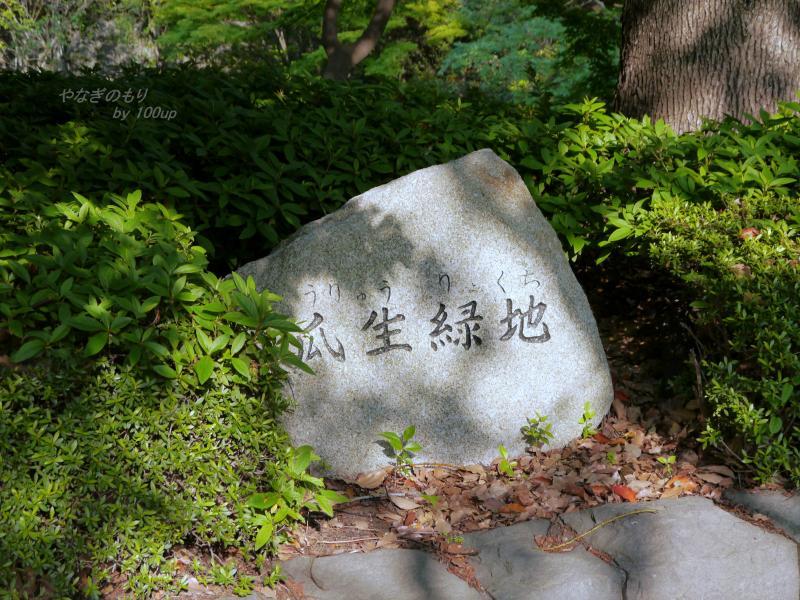 2013,5,5瓜生緑地-1
