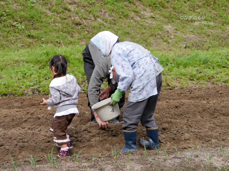 2012,5,4新潟県『畑仕事』