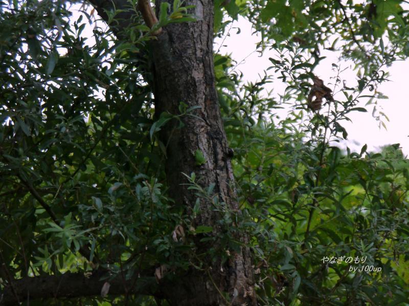 2012,8,12新潟の樹液場