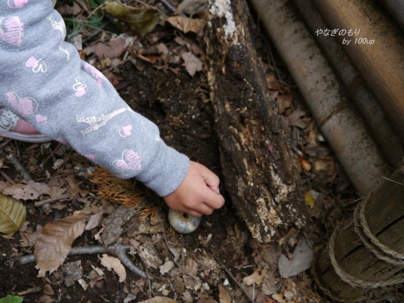 2012,11,11カブトムシ幼虫1