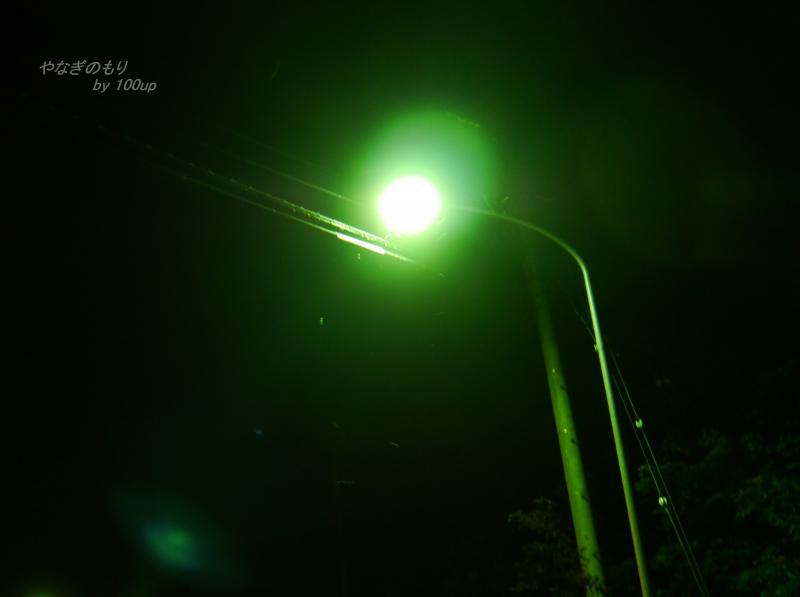 2012,8,12新潟県街灯廻り2