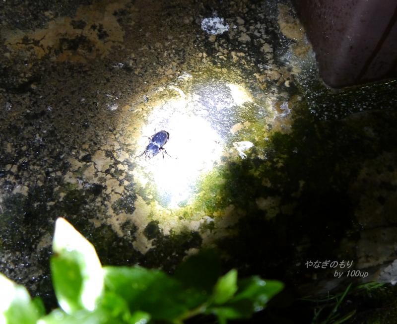 2013,8,5新潟県街灯廻り2日目-3