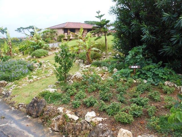 レゾナーレ小浜島20131023013