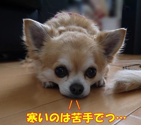 gf5P1120109.jpg