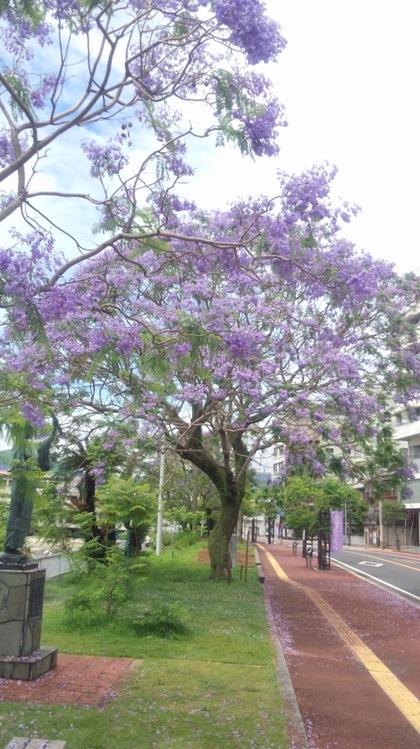 ジャカランダの花Ⅱ