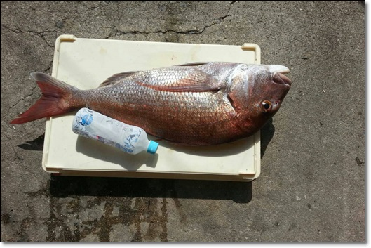 keipapa鯛釣り