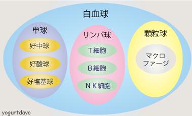 NK細胞(ナチュラルキラー細胞)について