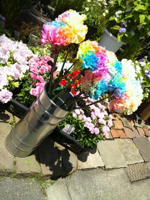 娘のお花屋さんのレインボーなカーネーション