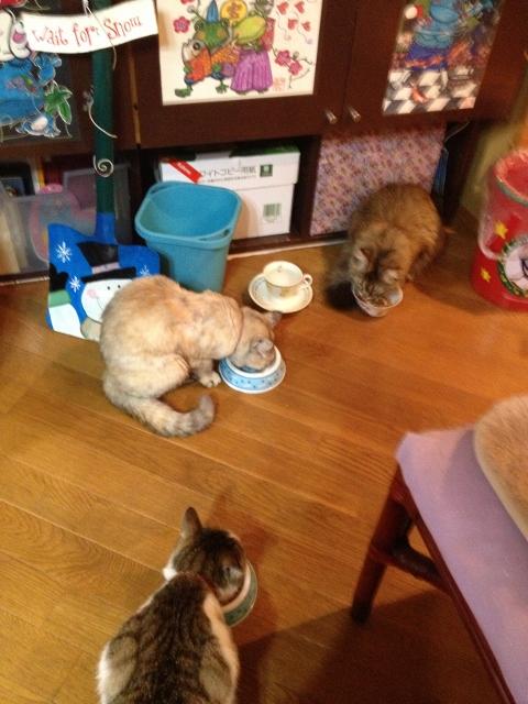 猫たちに癒される毎日です。