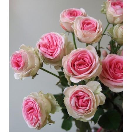 このバラ素敵です。