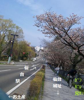 2013 4若冲さん1