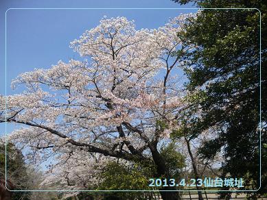 2013 4若冲さん2
