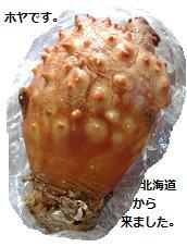 2013 5ホヤ北海道