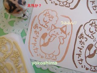 2013 6やさしくネコ1