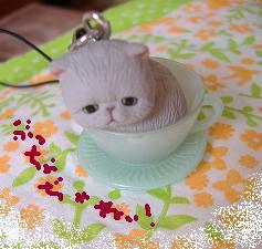 2013 6ぶちゃ猫