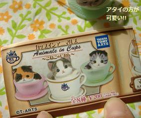 2013 6ぶちゃ猫2
