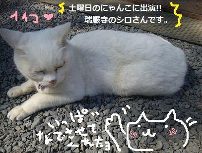 2013 6松島シロさん1