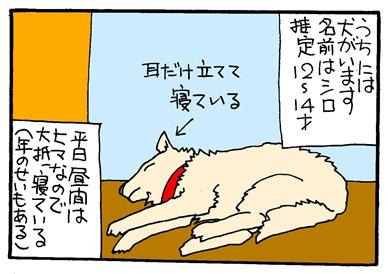 シロと次男-crop01