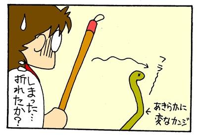 ヘビ骨折?-crop04