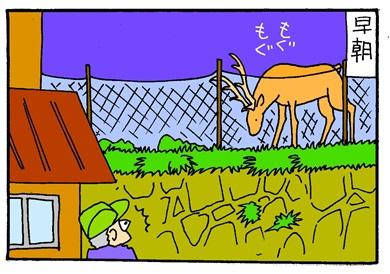 畑のシカ-crop01