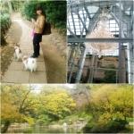 20121110arisugawa.jpg