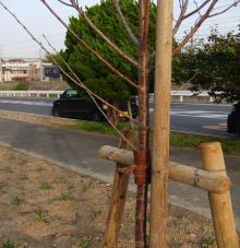 自転車で日本一周を目論むオヤジ