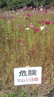 自転車で日本一周を目論むオヤジ(現在、走行中です)-20101018141951.jpg