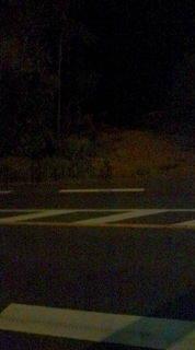 自転車で日本一周を目論むオヤジ(現在、走行中です)-20101018204025.jpg