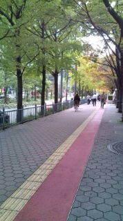 自転車で日本一周を目論むオヤジ(現在、走行中です)-20101115110918.jpg