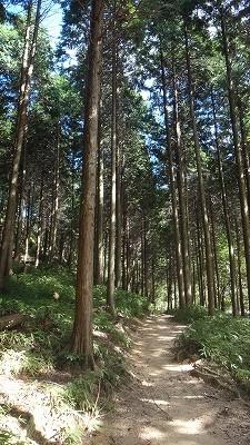 途中の杉林