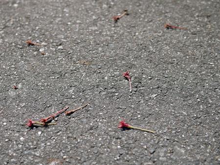 01桜のガクと謎の花