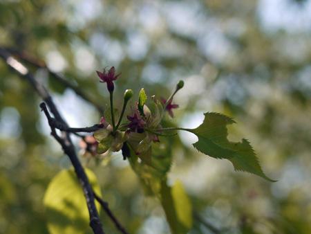 02桜のガクと謎の花