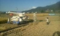 H260920育穂と川田のコンバイン見て