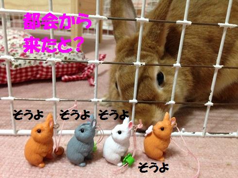 IMG_7933.うさぎがちゃ
