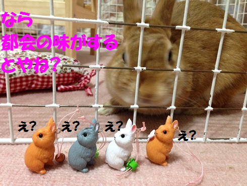 IMG_7932.うさぎガチャ