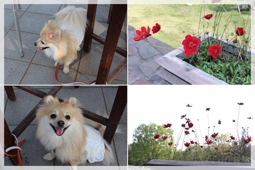cats1_20130507225528.jpg
