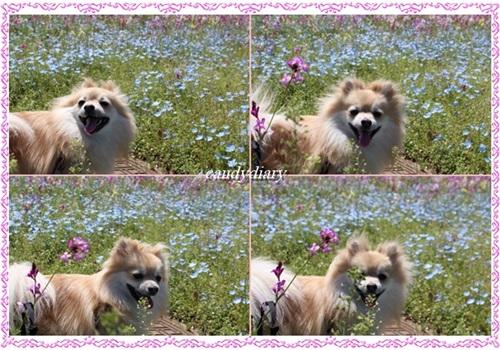 cats2_20130407225606.jpg