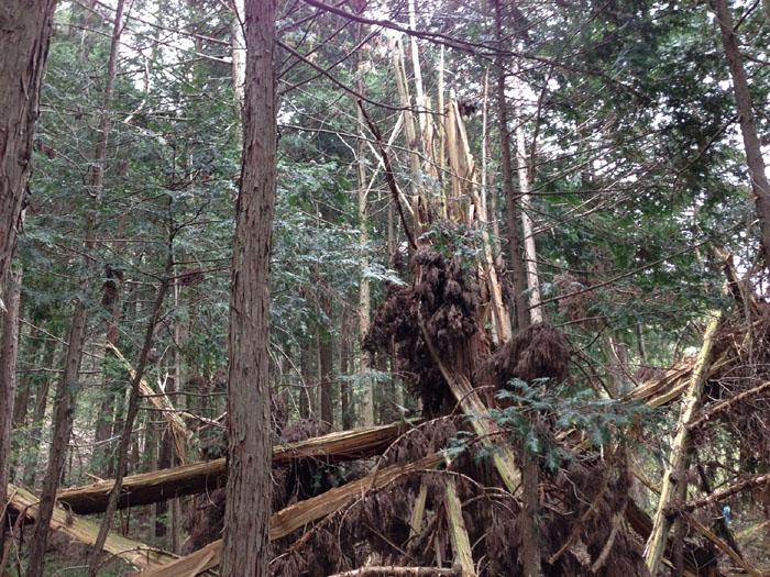 松之木 落雷 自然