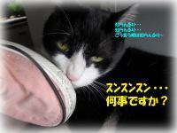 03_20130605143958.jpg