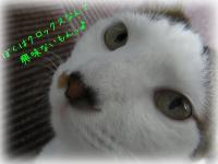 07_20130605144039.jpg