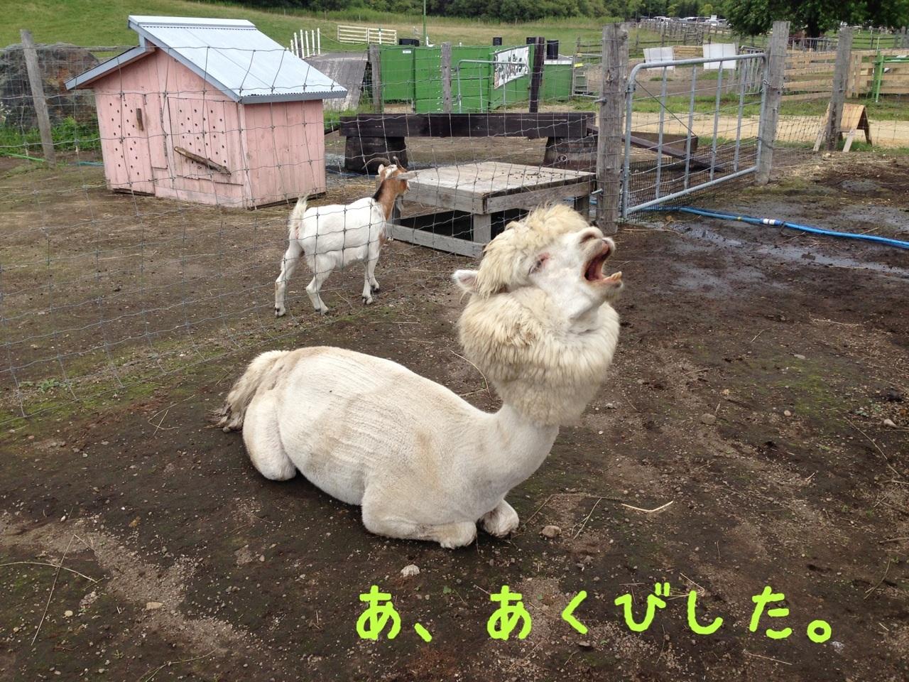 image_20130813111624df4.jpg