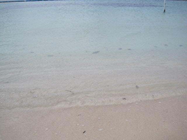 沖縄 186