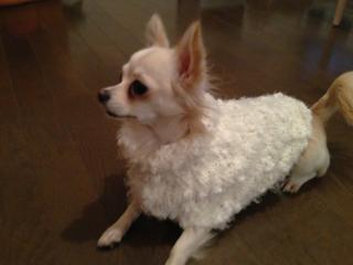 蓮白セーター2