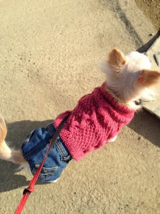 蓮ピンクセーター1