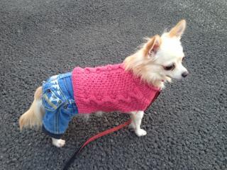 蓮ピンクセーター2