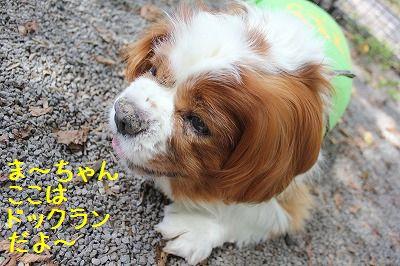 軽井沢オフ会2 103