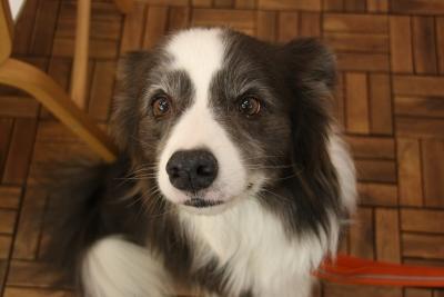 k7s dog cafe1-1