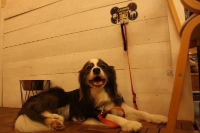 k7s dog cafe1-3